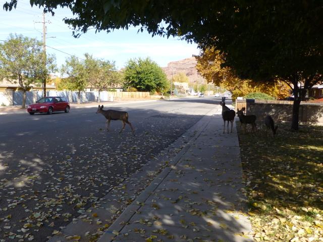 Deer_1